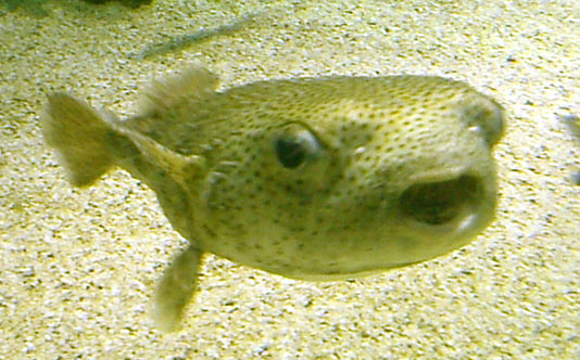 Places usa florida 2003 seaworld for Puffer fish florida